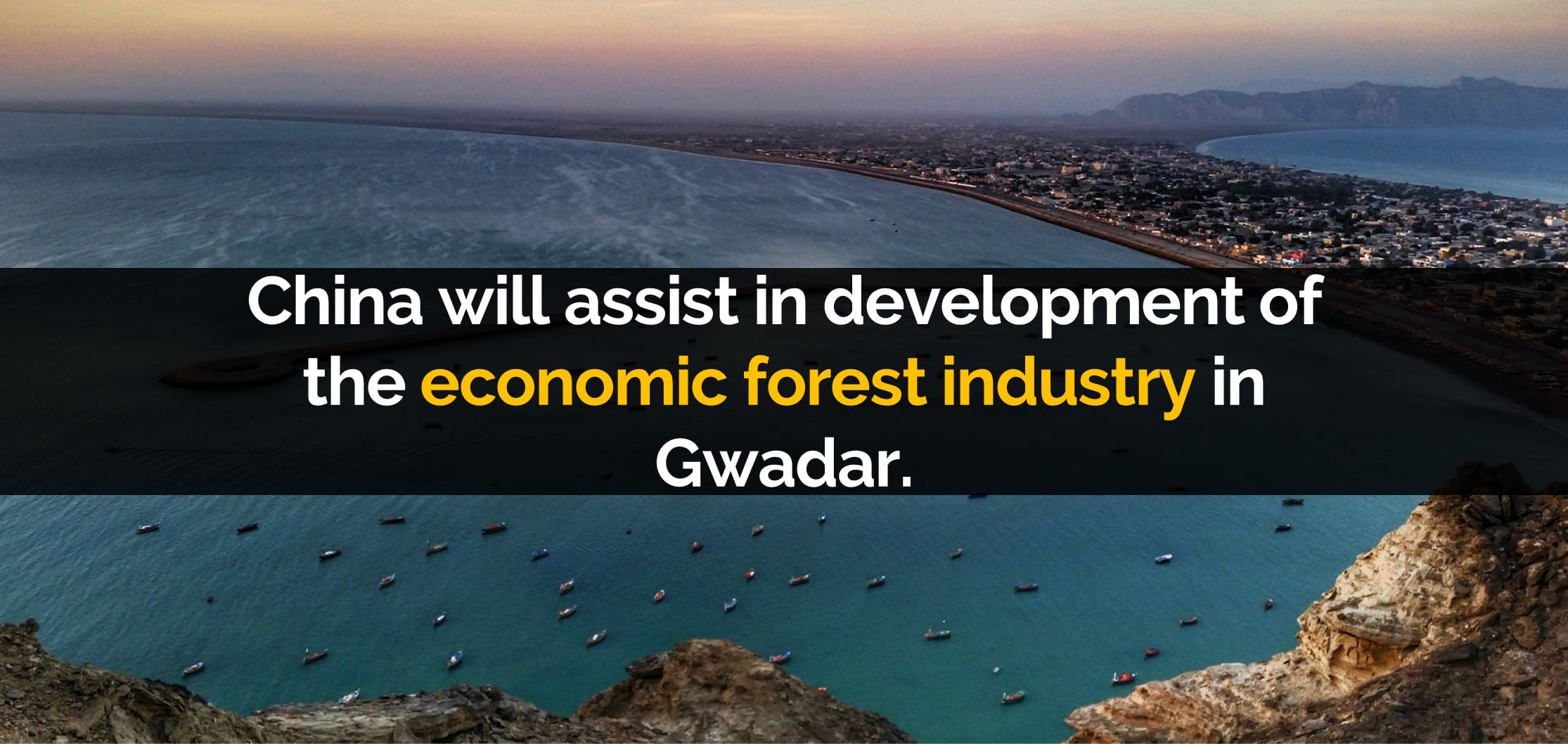 China will assist in development of the economic forest industry in Gwadar